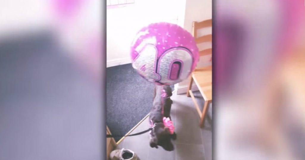 godupdates surprise puppy for 40th birthday