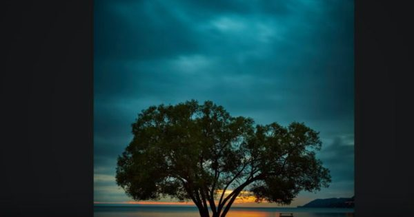 A Photographer Inspired Thousands With His Photography Of A Tree