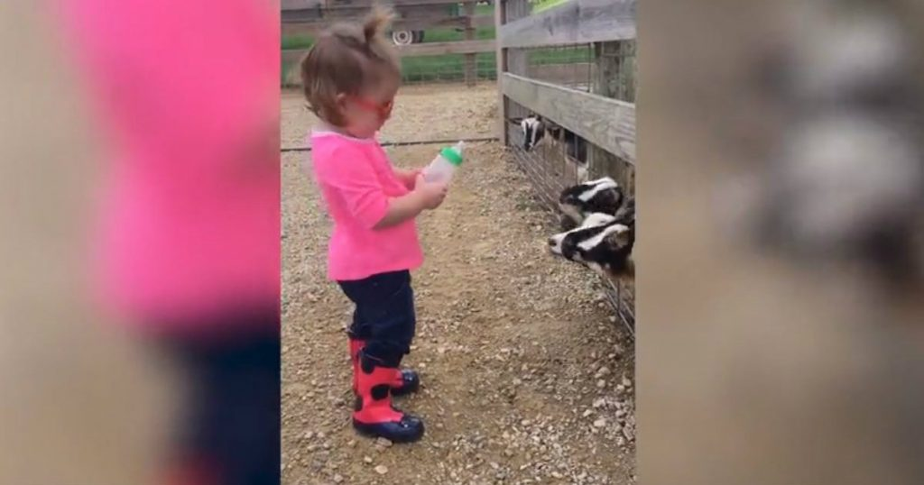 godupdates toddler feeding baby goats