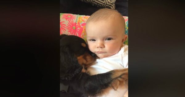 A Puppy And A Baby Are Cuddling During Nap Time