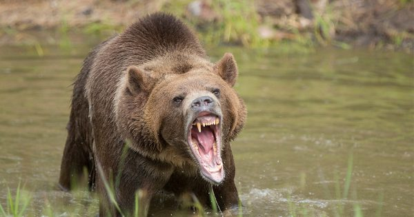 Atheist Begins Praying After Bear Attack in the Woods
