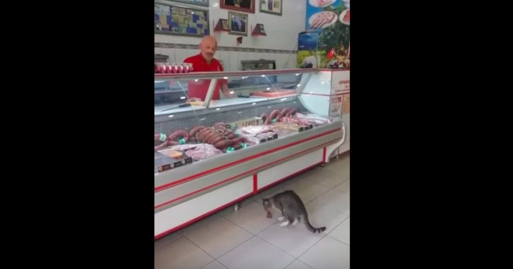 godupdates cat selecting food