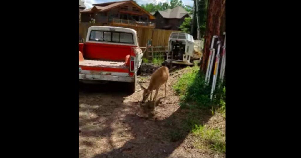 godupdates deer rescue afer fall