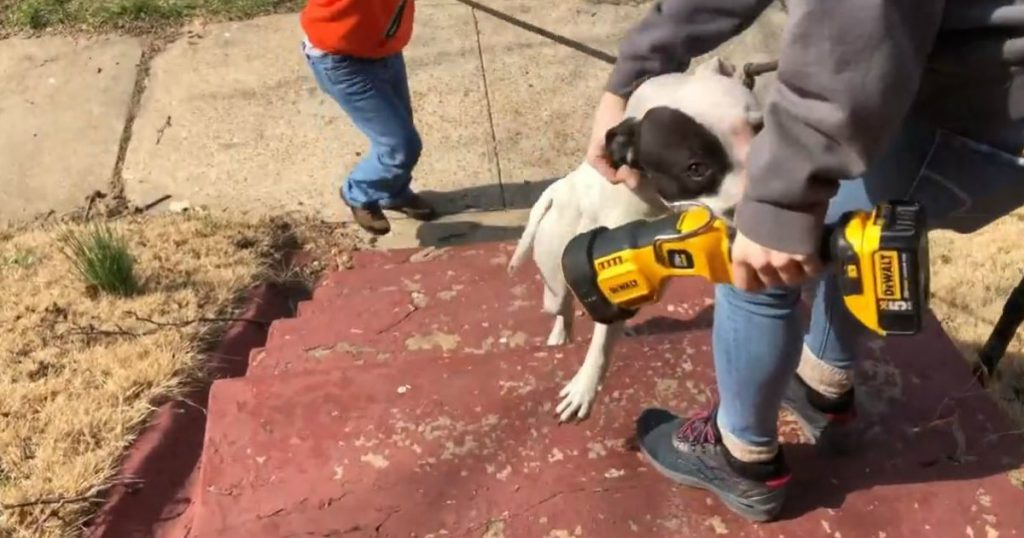 godupdates abandoned pit bull rescued