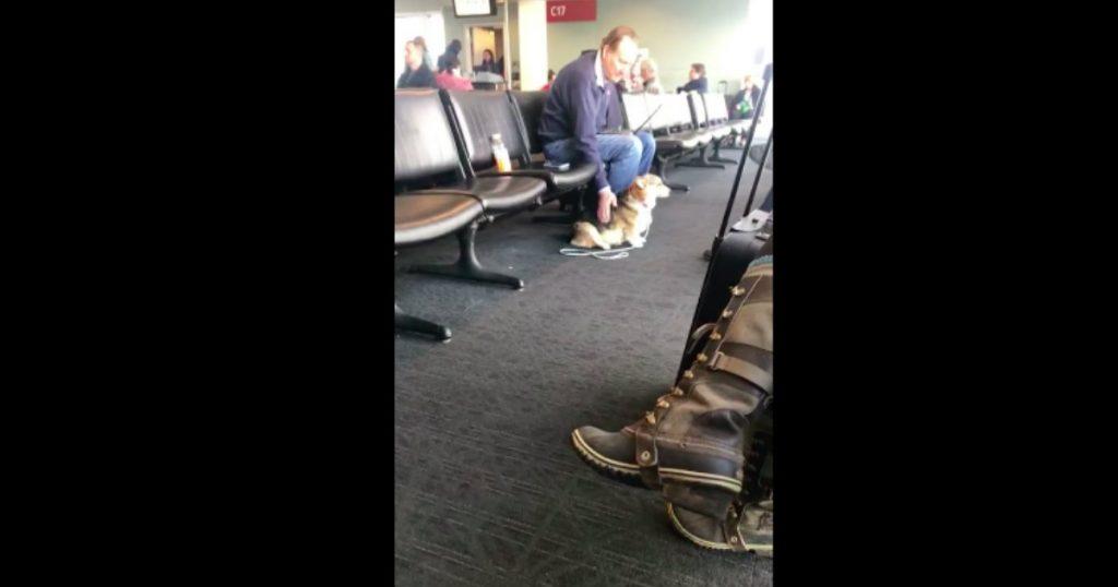 godupdates compassionate dog comforts stranger