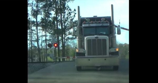 A Truck Driver Quickly Escaped His Truck Just In Time Before A Train Ran Into It