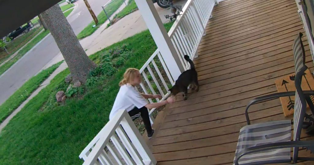 godupdates stranger tried stealing a pet cat from front porch 1