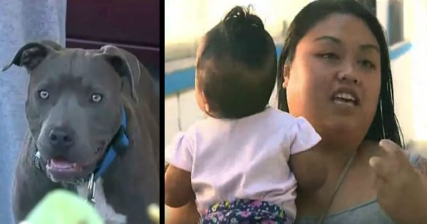 Pit Bull Grabs Baby's Diaper And Pulls Her From Bed In The Nick Of Time