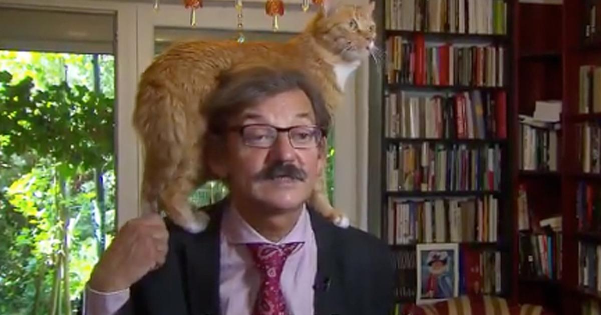 cat jumps on man's head interrupting interview
