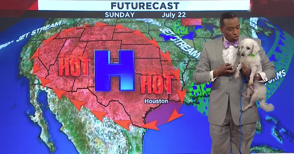Dog Interrupts A Weatherman On Live TV