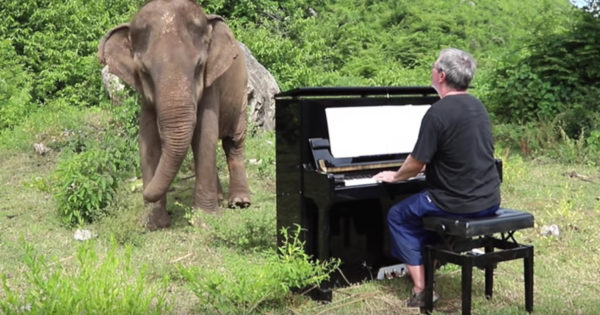 Musician Drags Piano Up Mountain To Play For 80-Year-Old Elephant