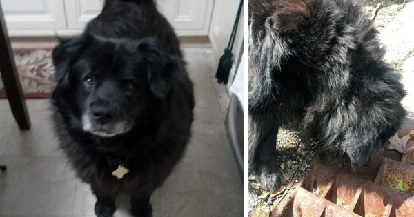 Dog Refused To Budge From Storm Drain And It Saved A Life