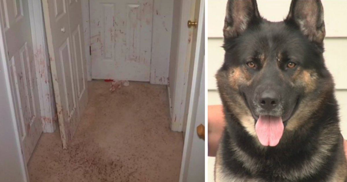 pet dog protected home from intruder fb
