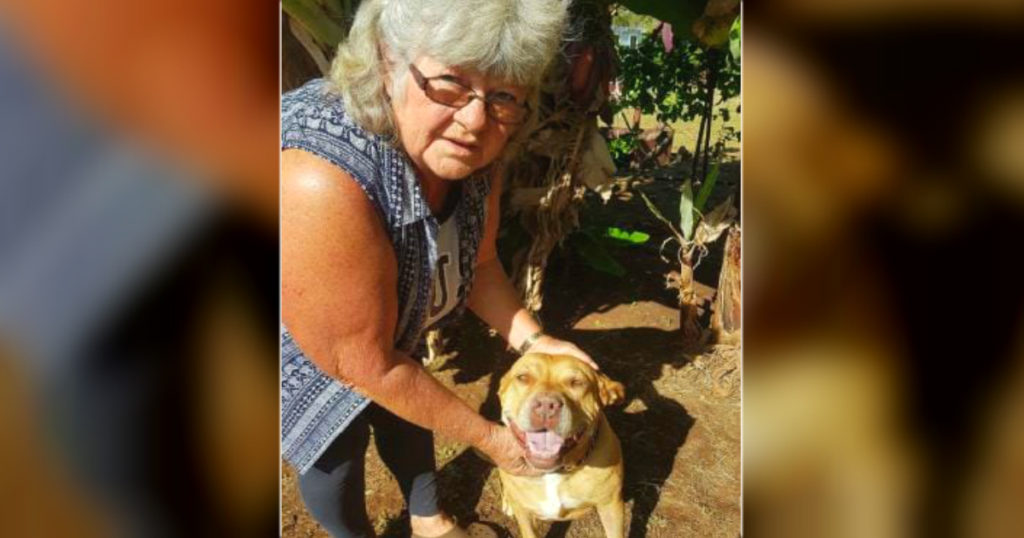 pit bull mix saved her owner from deadly snake bite 2