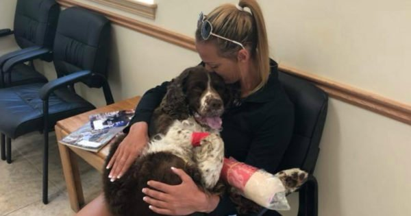 Mom Prays And Gets Help From Angels To Carry 55-lb Injured Dog Down Mountain