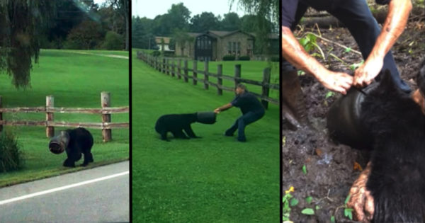Brave Strangers Risk Their Lives Saving Bear With Bucket Stuck On Its Head