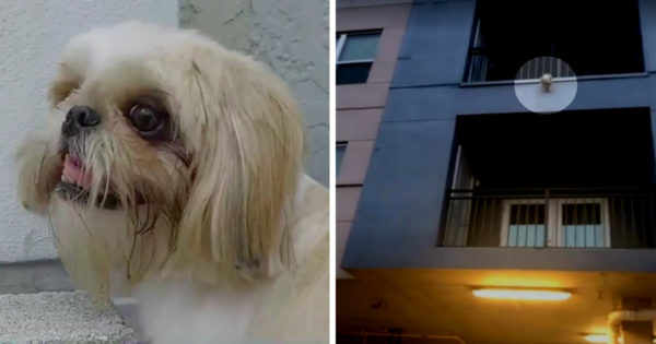 Strangers Race To Save Dog Dangling From Balcony Just Before He Falls 3 Stories
