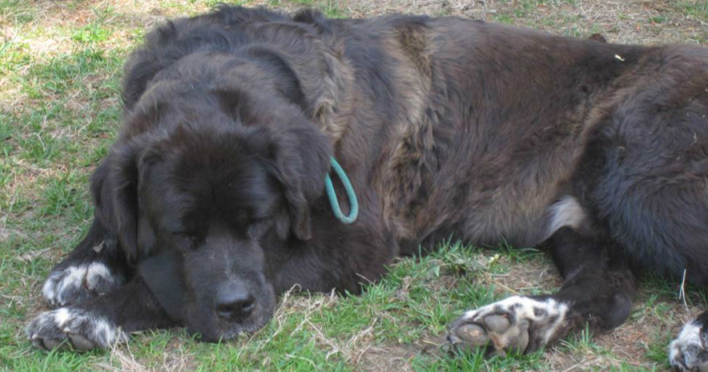dog chained outside diesel animal rescue story