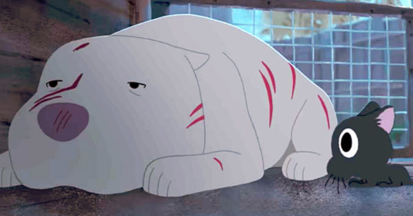Pit Bull And Stray Cat Make Unlikely Pair In Animated Short Carrying Deep Message