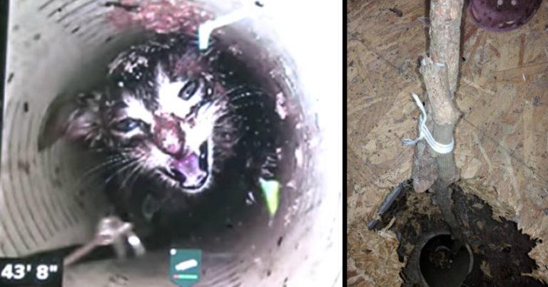 kitten fell 43 feet down in a well pipe