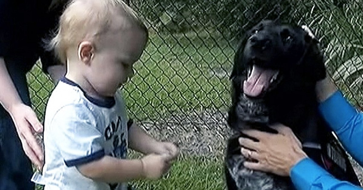 dog busted bad babysitter saved baby boy