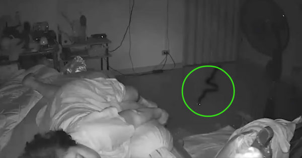 Security Camera Catches Snake Sneaking Into Room While Grandma Sleeps