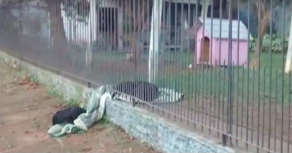 Stray Puppy Was Shivering Until Kind Dog Gave Up Its Own Blanket