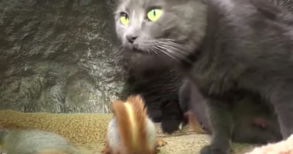 4 Baby Squirrels Adopted By Pusha The Cat Make For A 1-Of-A-Kind Family
