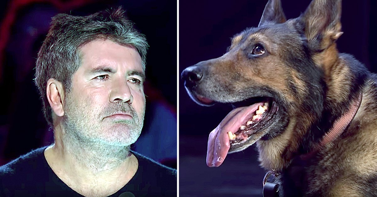 simon cowell cried hero police dog finn audition
