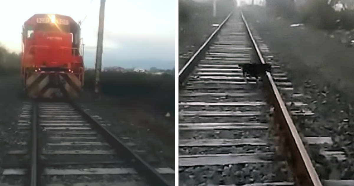 dog chained to railroad