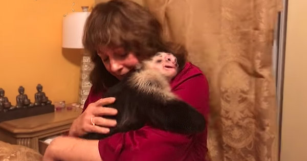 Adorable Monkeys Get So Excited When Their Grandma Visits