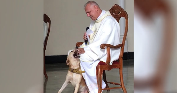 Friendly Dog Joins Priest On Stage During Church Service