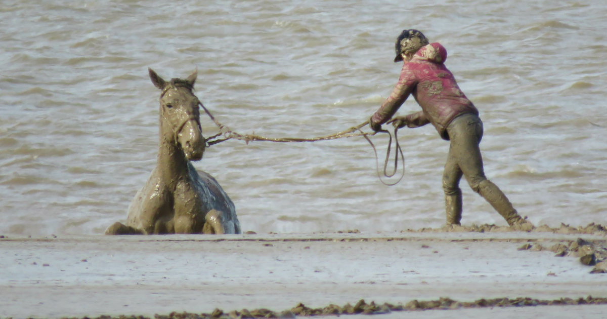 horse rescue on beach