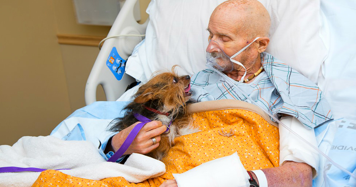 goodbye to a dog veteran in hospice