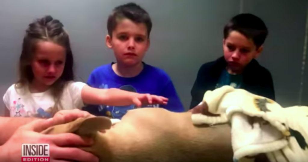 pit bull puppy behavior snake