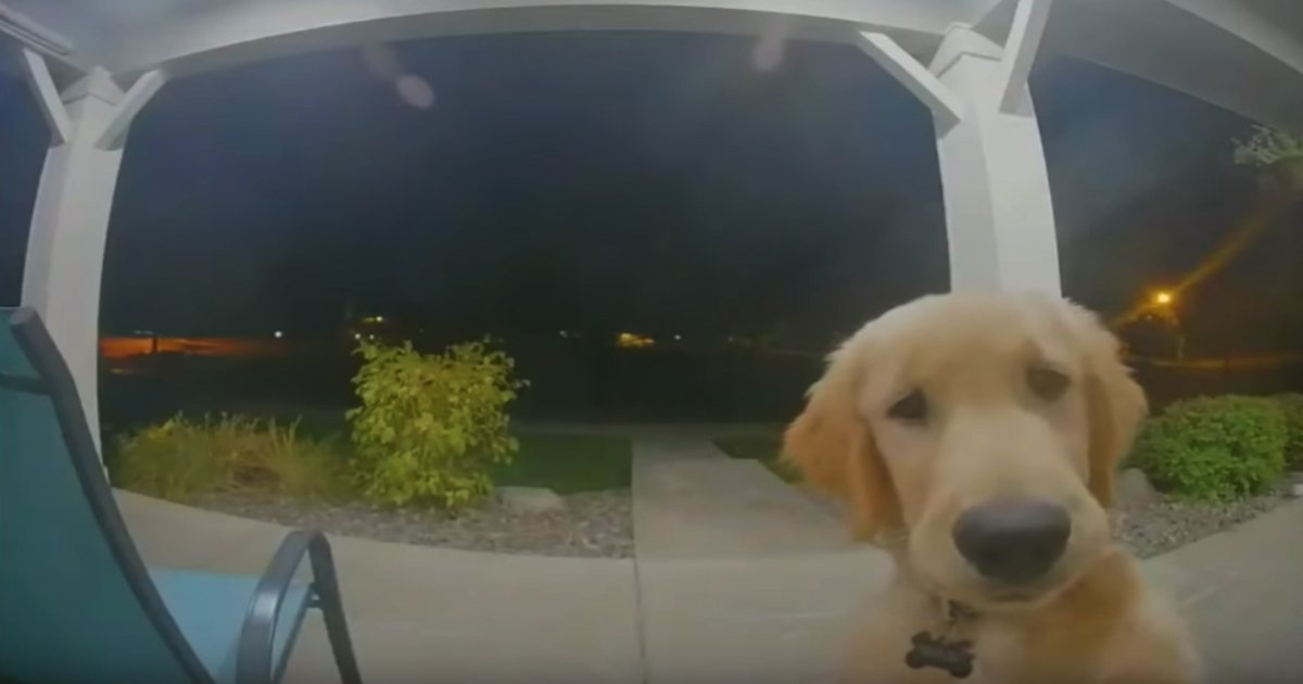 smart dog in the world rings doorbell