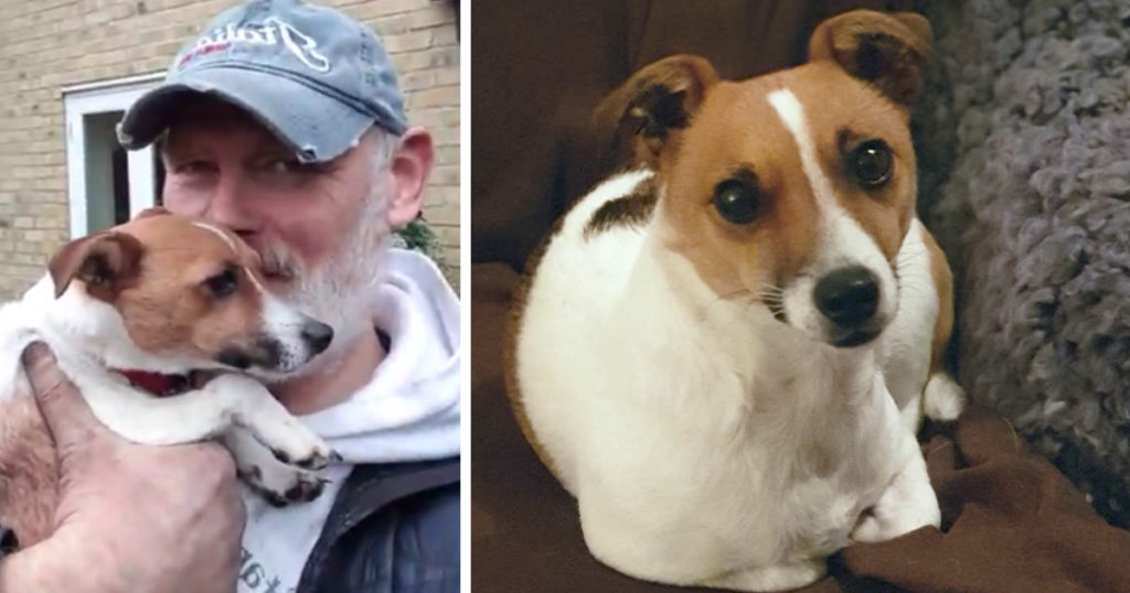 lost dog rescue alan whitton