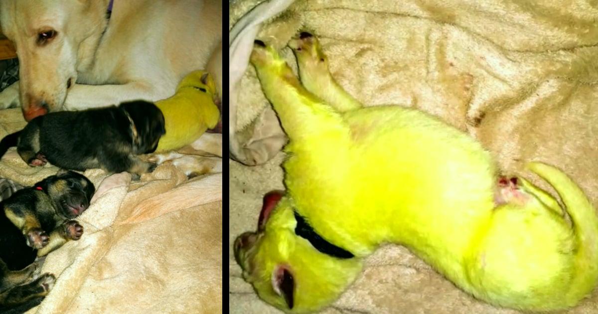 green puppy born