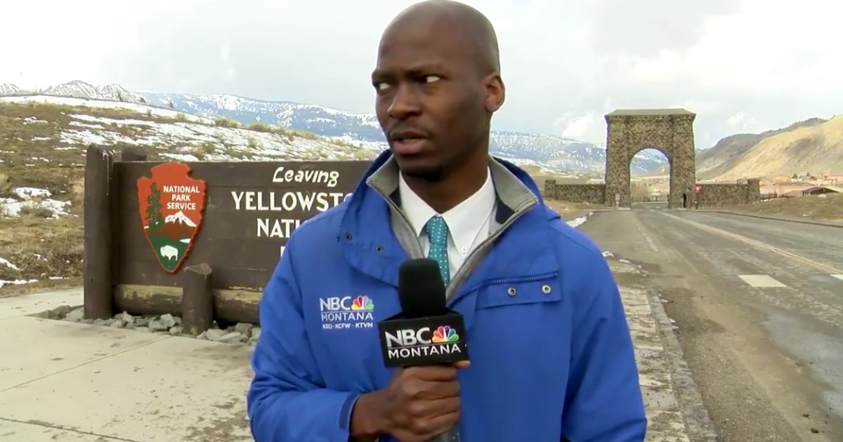 nbc news reporter reacts herd of bison