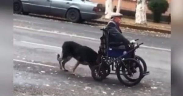 most loyal dog