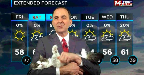cat interrupts weather forecast