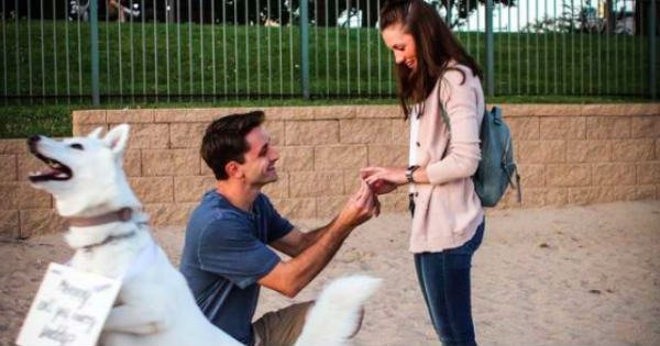 dog helps with proposal