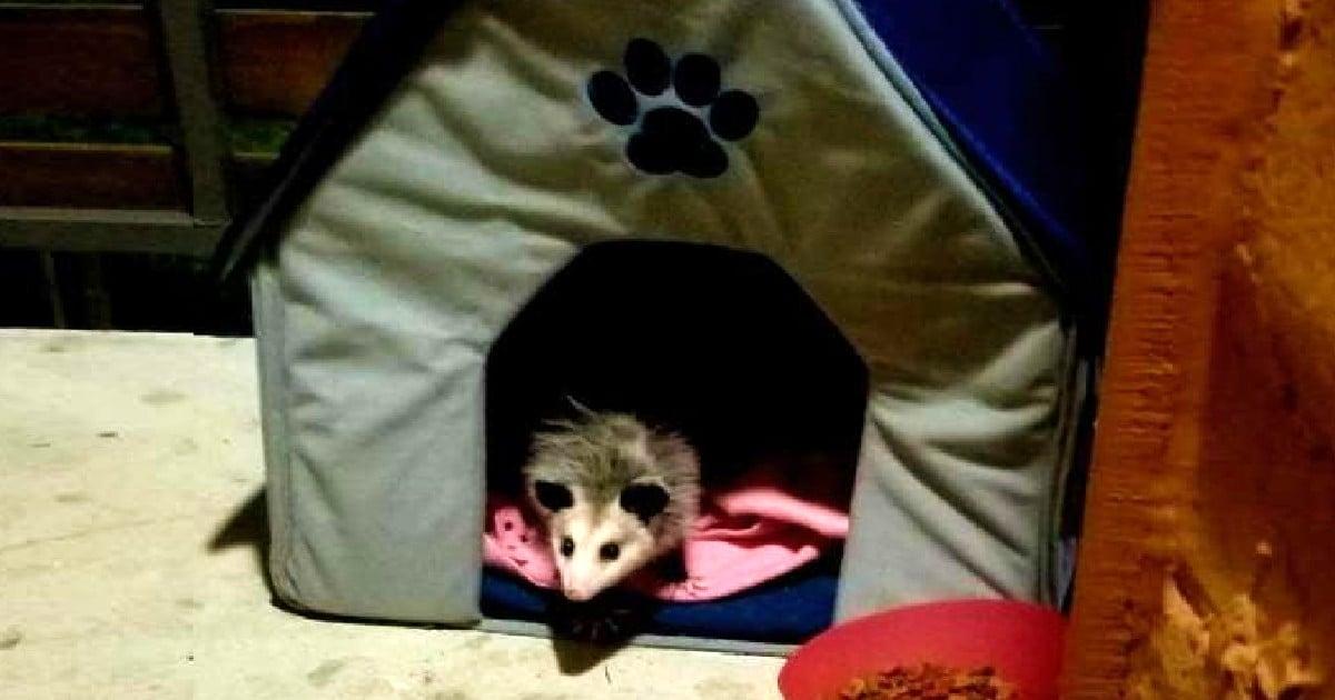 possum as a pet michelle slater