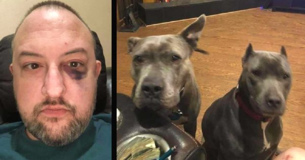 Man Rescues 2 Pit Bulls Nobody Wanted And Later They Return The Favor When Someone Breaks In
