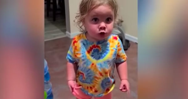 Stubborn Toddler Argues With Mom And Dad Even Though She's Been Caught Red-Handed