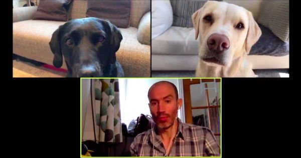 video chat with dogs
