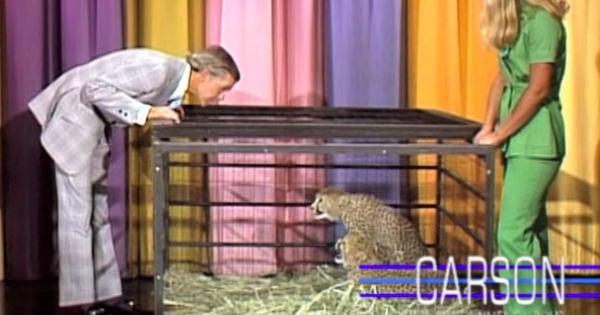 Johnny Carson cheetah face off
