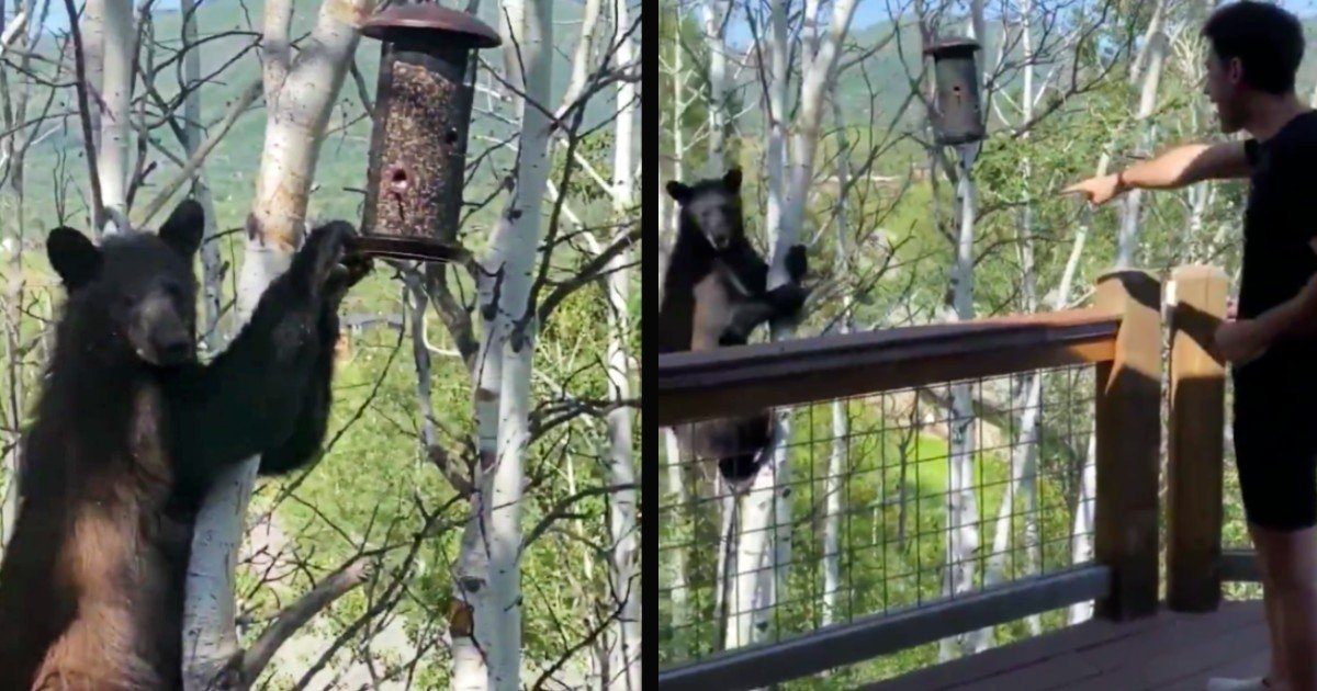 bear in a tree gets scolded