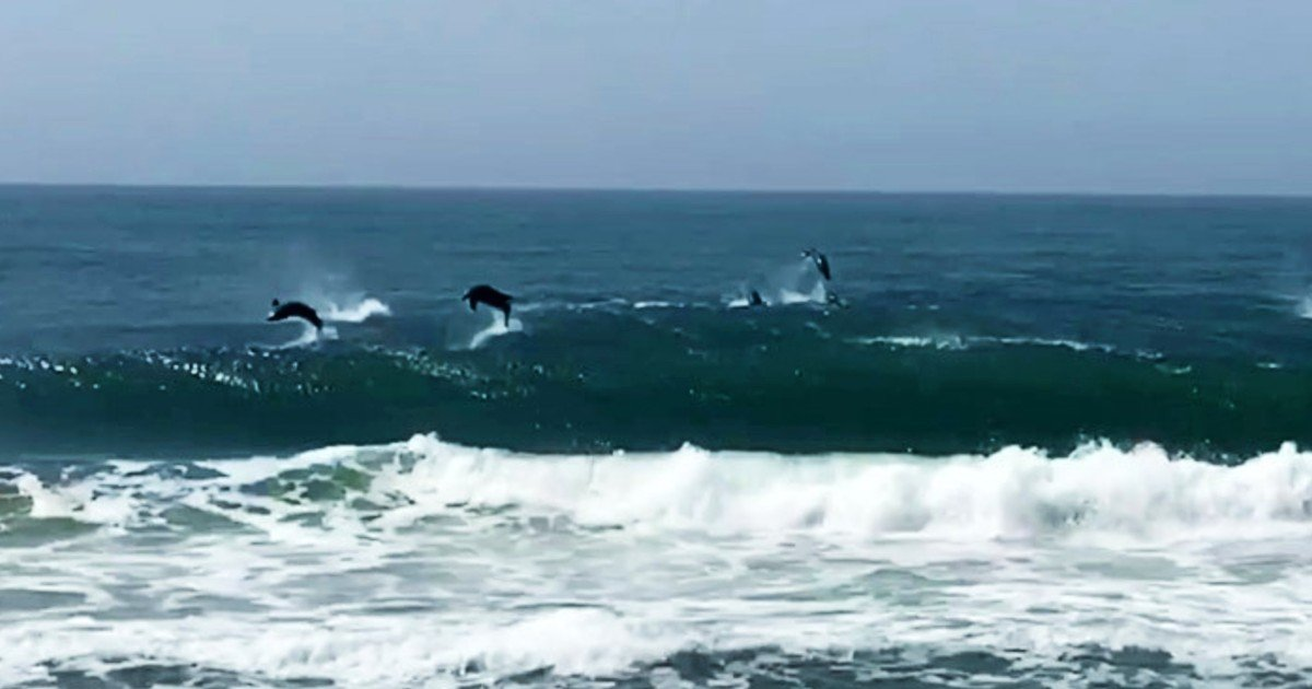 dolphins jumping out of water brian mcarthur