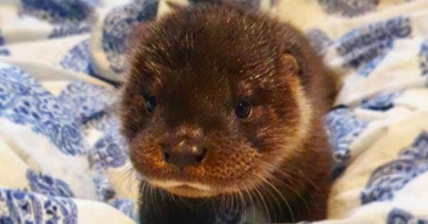 abandoned baby otter